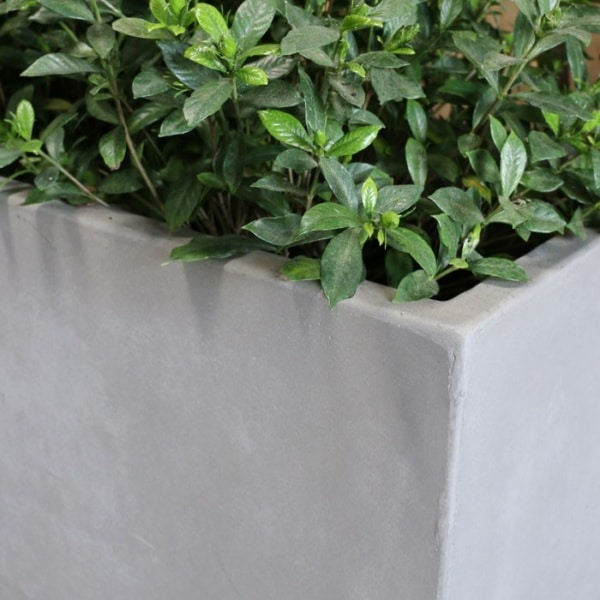 raw concrete planter rectangle closeup