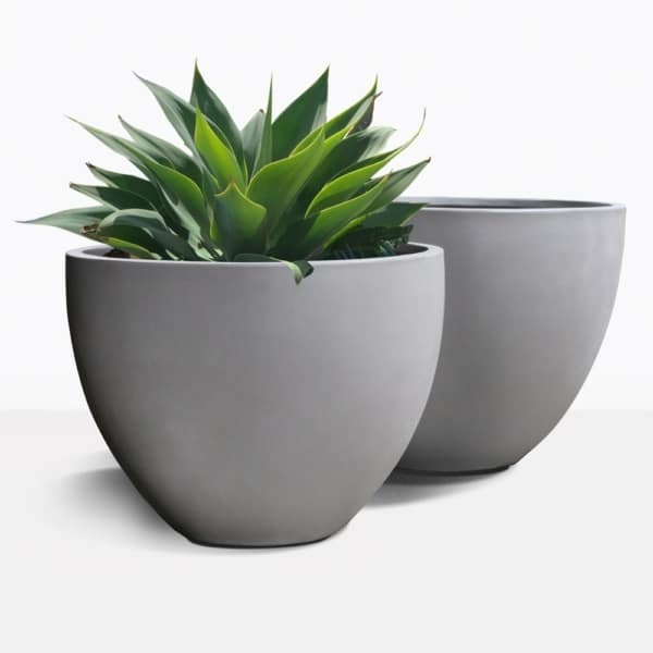 Livingstone Raw Concrete Planter with Plant