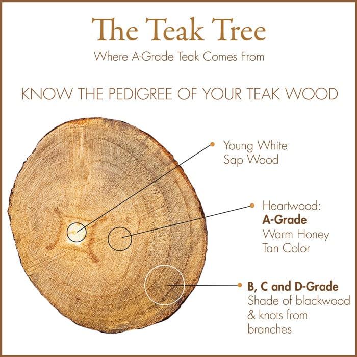 Diagram of Teak Log